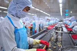 Hàn Quốc tăng nhập khẩu tôm sú chế biến từ Việt Nam