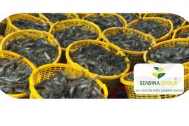 Doanh nghiệp ngành tôm lo bị ảnh hưởng bởi làn sóng người về từ TP.HCM