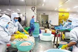 Giá cá tra nguyên liệu tiếp tục ở mức thấp