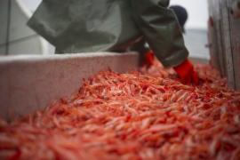 Canada tìm cách tăng xuất tôm sang thị trường Trung Quốc