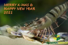 MERRY XMAS & HAPPY NEW YEAR 2021