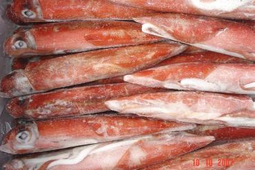 WHOLE ROUND RED SQUID FROZEN ON BOARD