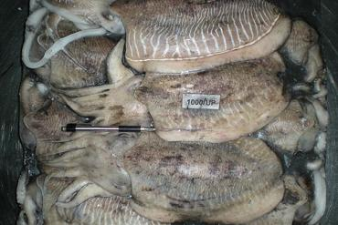 WHOLE ROUND CUTTLEFISH